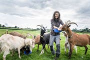 Die Geissen sind in Neukirch geblieben. Ihre zwölf Esel und zwei Pferde hat Monika Aliesch nach Deutschland verlegt. (Bild: Andrea Stadler)