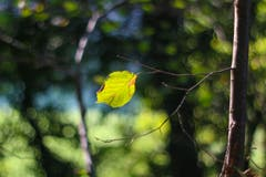 Herbstliche Stimmung. (Bild: Petra Jung (Hämikon, 30. September 2018))