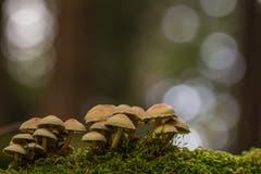 Waldpilze im Hudemoos (Bild: Franziska Hörler)