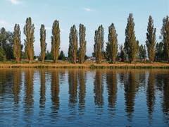 Abendstimmung mit Pappeln entlang der Elbe.