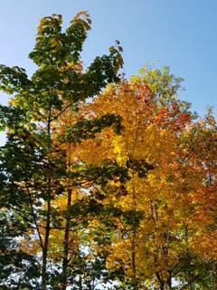 Herbstfarben im Breitfeld. (Bild: Reto Schlegel)