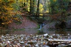 Herrliche Herbststimmung im Wattbachtobel bei der Höll. (Bild: Franz Häusler)