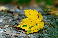 Herbstzeit. (Bild: Marianne Schmid (Gunzwil, 9. Oktober 2018))