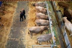 Ohne sie wäre es keine richtige Olma: Die Kühe... (Bild: Keystone)