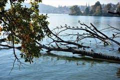 Sonnen-Vollbad am Quai, in Luzern. (Bild: Josef Habermacher (Luzern, 11. Oktober 2018))
