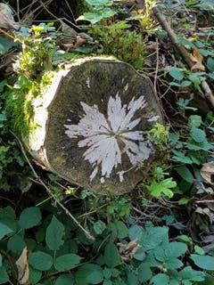 Natur-Kunst im Wald bei Müselbach gesehen. (Bild: Xaver Fäh)