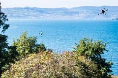 Hoch über dem Zürichsee... (Bild: Ueli Frey)