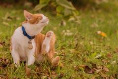 Katzen im ersten Herbstlaub. (Bild: Franziska Hörler)