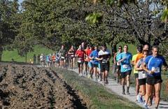 Der Halbmarathon führt die Läufer durch eine geschützte Uferlandschaft. (Bild: Andy Mettler/Swiss Image)
