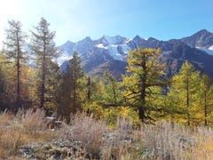 Wunderschöne Berge der Mischabelgruppe. (Bild: Bruno Ringgenberg (Kreuzboden-Saas Grund, 12. Oktober 2018))