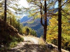 Phänomenale Natur, aufgenommen unterwegs von Kreuzboden nach Saas-Grund. (Bild: Bruno Ringgenberg, 12. Oktober 2018)