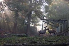 Im Hirschpark Luzern. (Bild: Larisa Gheorghe (Luzern, 14. Oktober 2018))