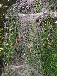 Ein 3D Spinnennetz in Montlingen. (Bild: Toni Sieber)