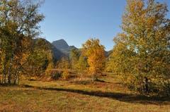 Goldener Oktober-Sonntag auf der Wolzenalp. (Bild: Christian Haab)