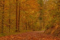 Goldener Herbst am Wattbach zwischen Riethüsli und Wolfganghof. (Leserbild: Franziska Hörler - 14. Oktober 2018)