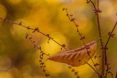 Die Blätter fallen in Wattbach. (Bild: Franziska Hörler)
