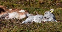 "Diese Wärme macht aber auch ""hundemüde"". (Bild: Stephan Lendi)"