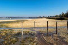 Durch den tiefen Wasserstand sind im Ermatingerbecken grosse Schlickflächen frei geworden. (Bild: Fritz Sigg)