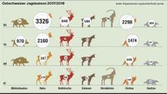 Die Ostschweizer Jagdstatistik zeigt, wie viele Tiere im Jahr 2017/2018 erlegt wurden.