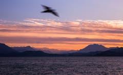 Abendrot über den Alpen (Bild: Daniel Hegglin)
