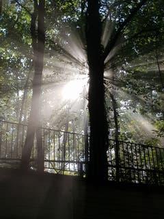 Sonnenstrahlen tanzen durch den Bischofszeller Wald. (Bild: Reto Schlegel)