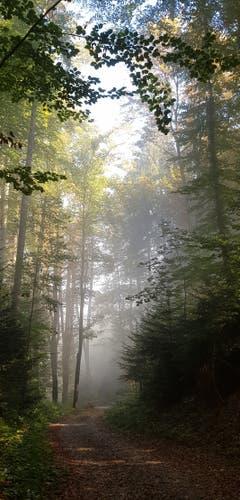 Im Bischofszeller Wald verdrängt die Sonne den Nebel. (Bild: Reto Schlegel)