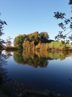 Der Herbst zieht auch am Gübsensee in St.Gallen ein. (Bild: Dominik Karrer)