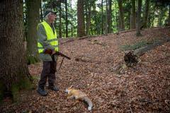 Für den Jäger ist ein gesunder Fuchs eine schöne Beute. (Bild: Raphael Rohner)