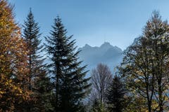Der Morgen erwacht. Der Säntis umrahmt vom Chräzerenwald. (Bild: Franz Häusler)
