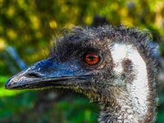 Coole Frisur im Walter Zoo Gossau. (Bild: Renato Maciariello)
