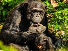 Mutterglück im Herbst, aufgenommen im Tierliwalter Zoo. (Bild: Renato Maciariello)