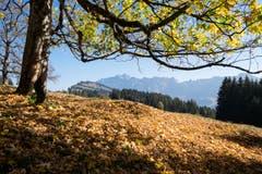 Goldener Herbst auf Gössigen. (Bild: Franz Häusler)