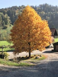 Auf einer Wanderung von Menzingen nach Sihlbrugg. (Bild: Albin Stücheli (Neuheim, 17. Oktober 2018))