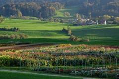 Herbstlandschaft beim Mötteliweiher, bunt und grün. (Bild: Franz Häusler)