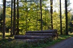 Herbstlicher Waldspaziergang bei tollem Wetter. (Bild: Gerhard Estermann (Hämikon, 4. Oktober 2018))