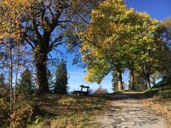 Auf dem Weg von Rigi Kaltbad zum Känzeli. (Bild: Angela Boddé (Rigi Kaltbad, 12. Oktober 2018))