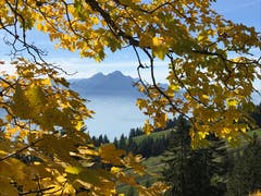 Goldener Herbst auf der Rigi mit Blick auf den Pilatus. (Bild: Andrea Arnold (Rigi, 12. Oktober 2018))