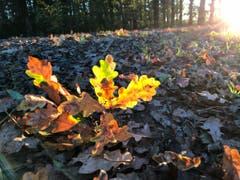 Sonnenstrahlen durch den Herbstwald. (Bild: Lucia Visser (Hünenberg, 16. Oktober 2018))