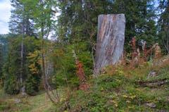 Gestern auf der Wanderung Klewenalp-Brisenhaus-Niederrickenbach. (Bild: Regula Aeppli (Niederrickenbach, 30. September 2018))