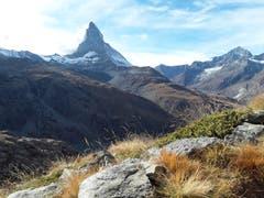 Traumaussicht auf das Matterhorn zwischen Gornergrat und Riffelberg. (Bild: Bruno Ringgenberg (19. Oktober 2018))