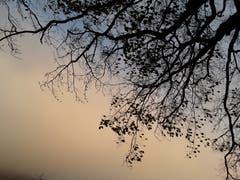 Herbstbaum auf dem Brünig. (Bild: Bruno Ringgenberg)