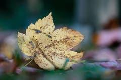 Herbst (Bild: Marianne Schmid)