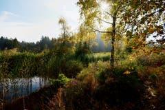 Hochmoor oberhalb Hemberg. (Bild: Walter Schmidt)