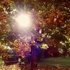Sonnenschein an einem Herbstmorgen (Bild: Remo Passeri)