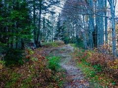 Herbstliche Farben auf der Schwägalp (Bild: Renato Maciariello)