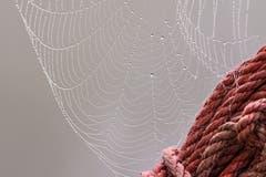 Ein Spinnennetz auf Drei Weihern (Bild: Franziska Hörler)