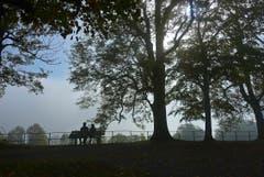 Rossbüchel/Fünfländerblick: Auf 920 m Höhe dominiert die Nebelobergrenze. (Bild: Walter Schmidt)