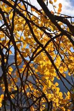 Goldiger Herbst (Bild: Robert Scherrer)