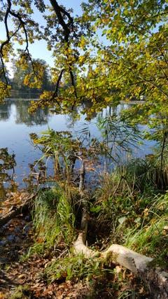 Sonniger Herbsttag am Steinibühlweiher. (Bild: Willy Birrer (Sempach, 23. Oktober 2018))