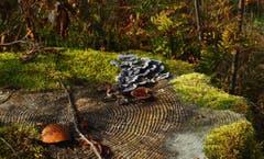 Moos, Schwämme und Laub auf einem Baumstrunk oberhalb Hemberg. (Bild: Walter Schmidt)